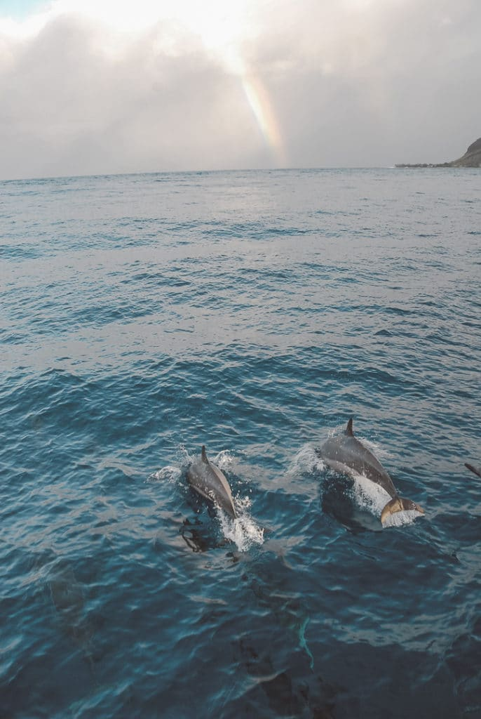 2 Dolphins swimming