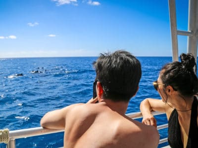 Dolphins and You tour guests view dolphins a short drive from Waikiki